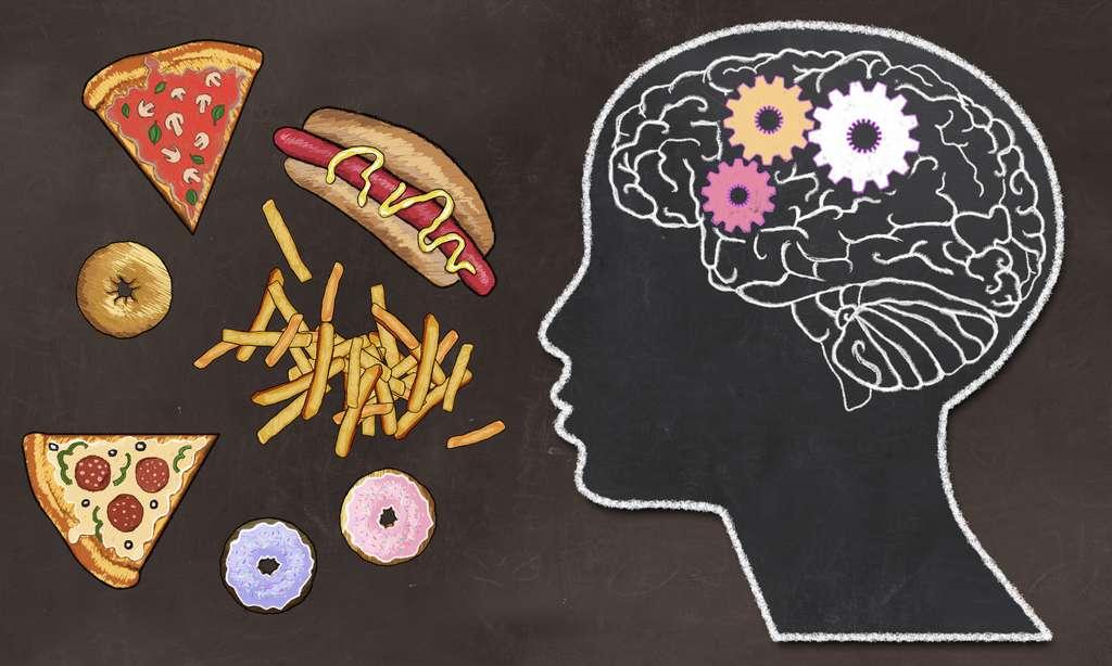 Notre cerveau et nos hormones sont des acteurs majeurs nos prises alimentaire. © T.L Furrer, Adobe Stock