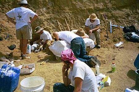 Enrobage et déplacement du fémur de T. rex par l'équipe de Mary Schweitzer. Crédit : Université de Caroline-du-Nord