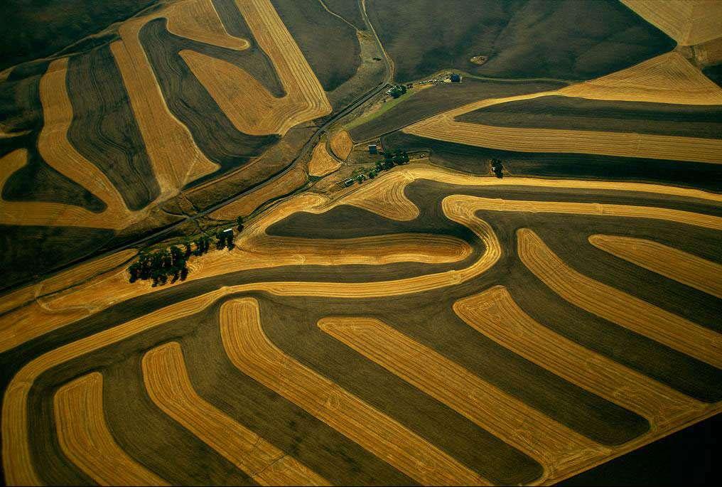 Agriculture près de Pullman, État de Washington, Etats-Unis (46°42' N - 117°12' O). Surnommé Evergreen State, «État toujours vert », l'État de Washington développe depuis des décennies la culture du blé et de l'orge, s'efforçant aujourd'hui de l'adapter à la topographie du terrain afin de ménager un sol fragilisé par d'anciennes pratiques agricoles érosives. L'« agro-business », qui allie agriculture, industrie, recherche et investissements financiers, maintient les États-Unis au premier rang mondial pour les exportations de céréales (environ 30 % du total mondial). © Yann Arthus-Bertrand - Tous droits réservés