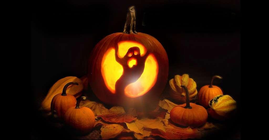 Les citrouilles d'Halloween. © Jill111, Pixabay, DP