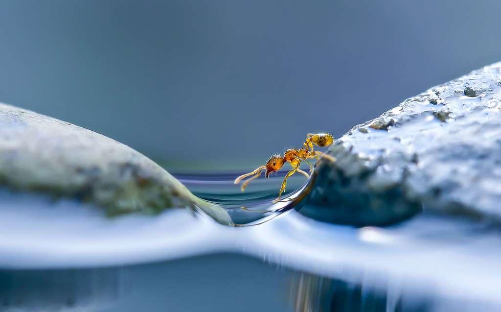 Après le déluge, une fourmi…