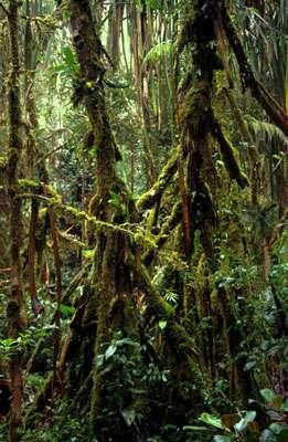 La forêt, lieu de vie des grands singes