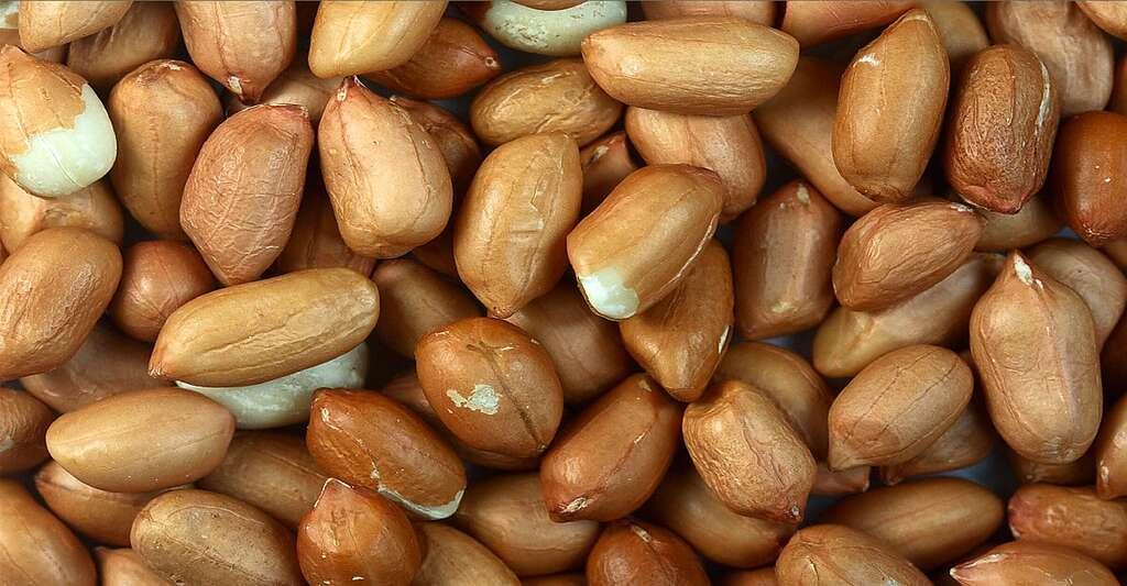 Les graines ovoïdes de l'arachide sont enveloppées dans un tégument sec rose à rouge. © Sanjay Acharya, GNU 1.2