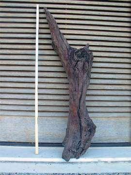La branche d'olivier qui a fait reculer la date de l'éruption de cent ans... (Courtesy of Science)