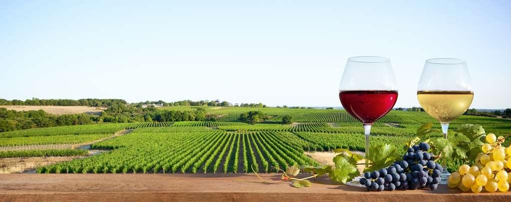 Où que vous alliez, ou que vous soyez, en France, l'alcool est omniprésent. © Thierry RYO, Adobe Stock