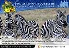 Cliquez sur les e-cards pour lire les informations sur chaque animal et les envoyer. © Futura-Sciences
