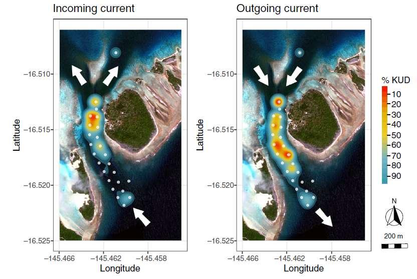 Probabilité de présence des requins dans la passe de Fakarava (vue aérienne) au cours des marées montantes (à gauche) et descendantes (à droite). © Papastamatiou et al., 2021