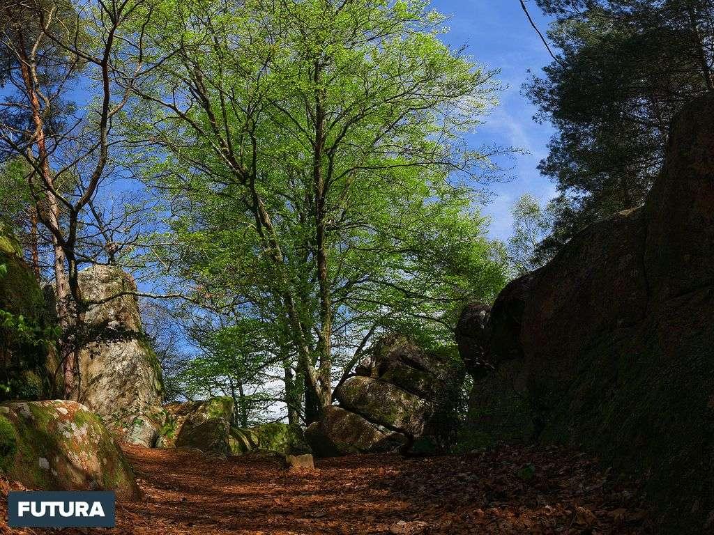 Feuillus et rochers
