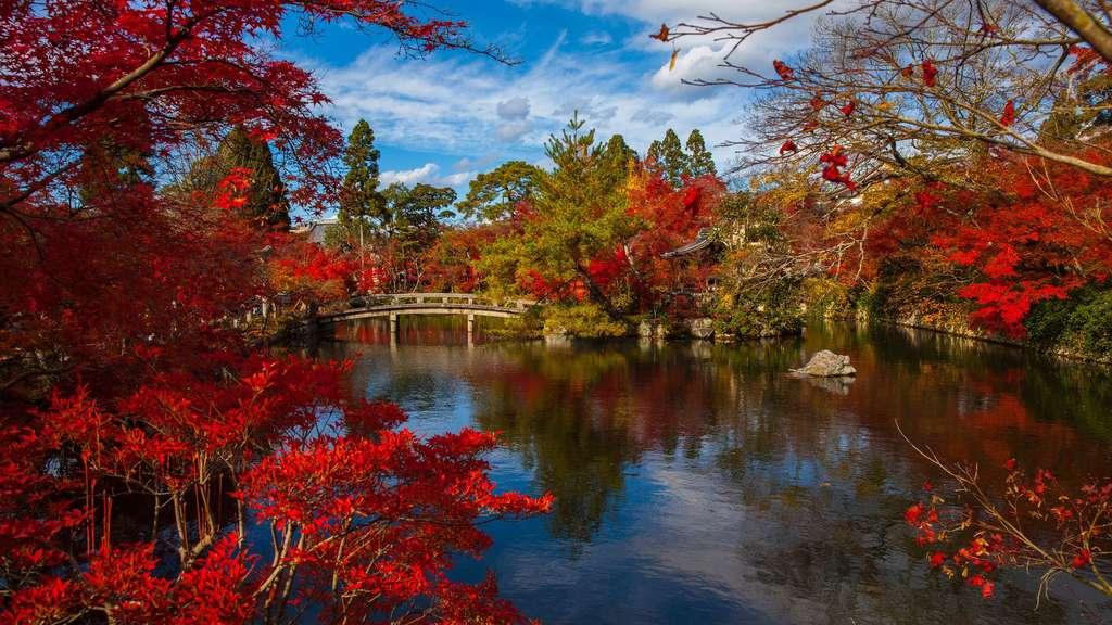 Le jardin japonais et son automne flamboyant