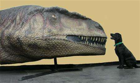 Le géant Mapusaurus (Courtesy of AP)