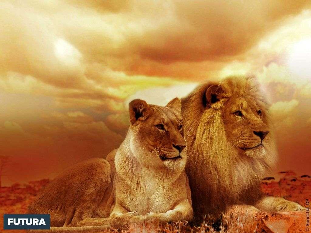 N'éveillez pas le lion qui se repose