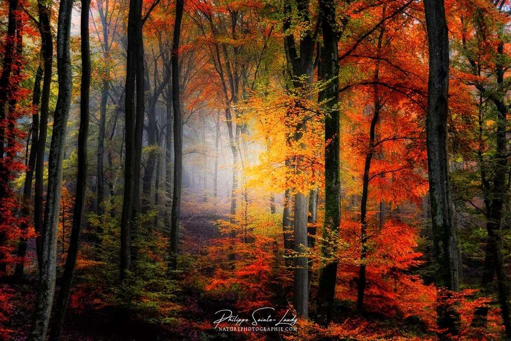 L'automne au bout du chemin