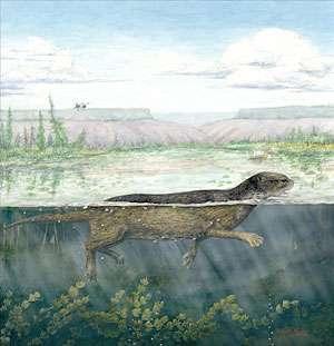 Puijila darwini devait être un bon nageur mais sans doute pas assez pour affronter l'océan. Les lacs d'eau douce devaient mieux lui convenir. (Cliquer sur l'image pour l'agrandir.) © Natalia Rybczynski et al. / Canadian Museum of Nature