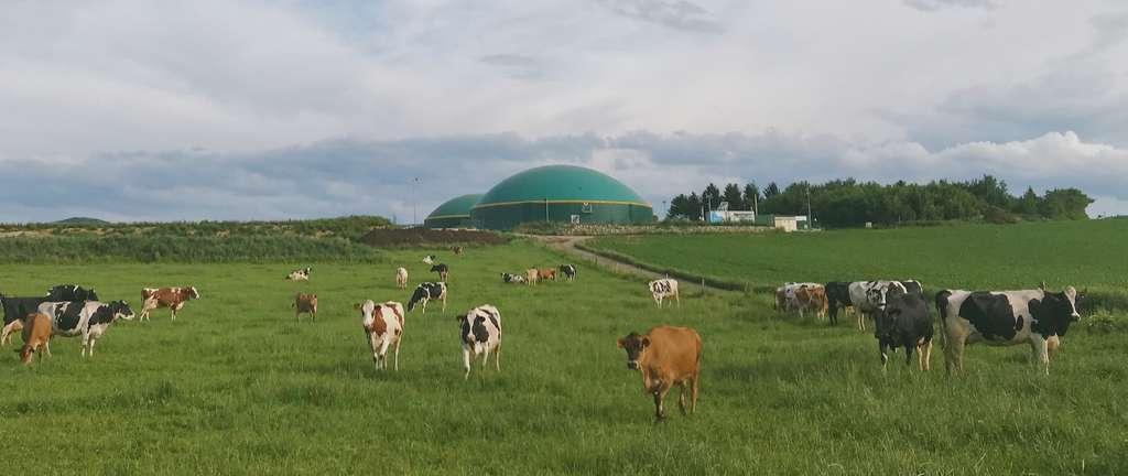 Le biogaz est obtenu par méthanisation des déchets organiques. Chez Ilek, lors de la souscription, il est possible de choisir son producteur. Par défaut, ce dernier est situé au plus proche du lieu de résidence. © Ilek