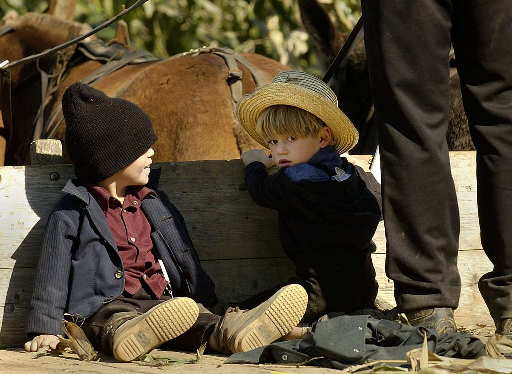 Les Amish vivent sur des fermes laitières où ils utilisent des chevaux comme moyen de transport et pour les travaux des champs. © Stan Honda, AFP