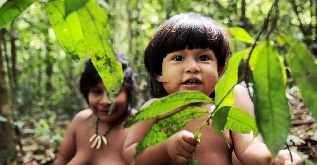 Enfants Awa. © Survival
