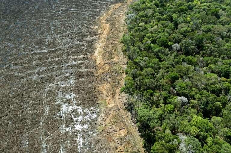 Vue aérienne d'une zone de déforestation de la forêt amazonienne, le 7 août 2020 près de Sinop, dans l'État du Mato Grosso, au Brésil. © Florian Plaucheur, AFP/Archives