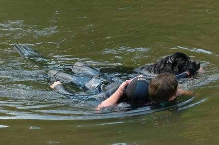 Le terre-neuve, un excellent nageur. © Terre Neuve 67
