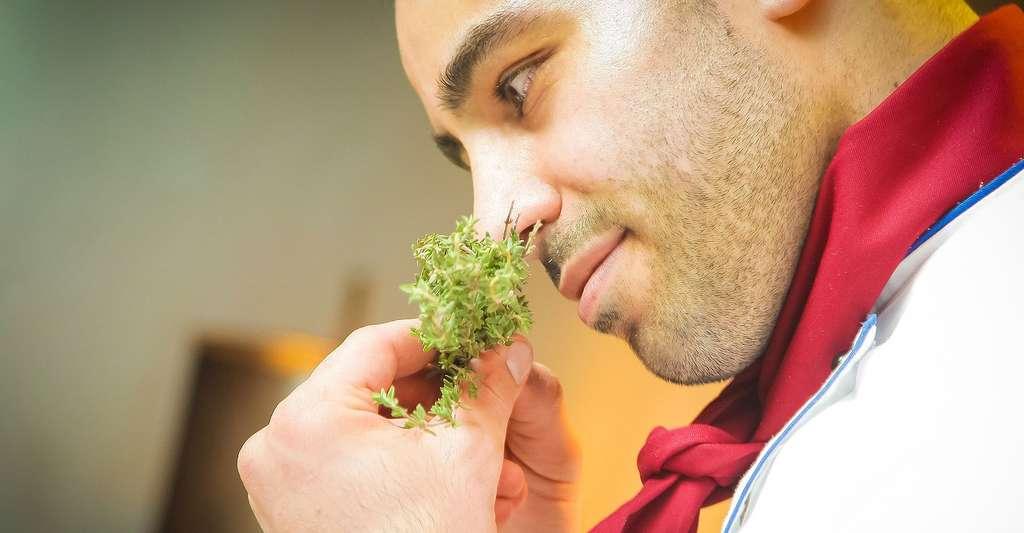 L'odorat est très important en cuisine. © RestaurantAnticaRoma, Pixabay, DP