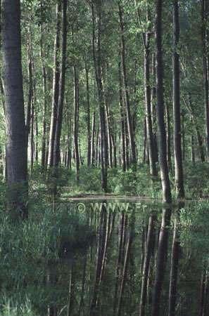 © WWF.Fr - Tous droits de reproduction interdit