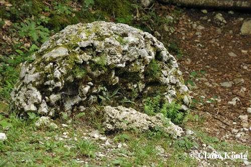 Meule du mont Saint-Martin. © Photo C. König DR