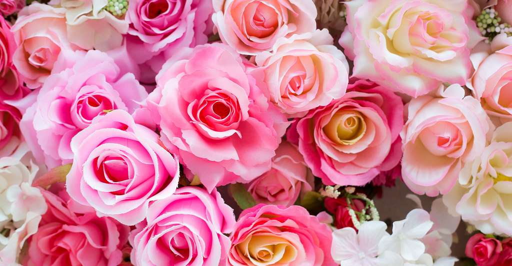 Bouquet de roses anciennes. © Mr.Boy, Shutterstock