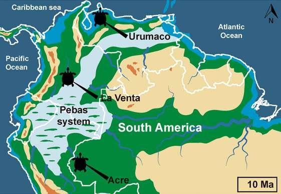 Stupendemys geographicus vivait en Amérique du sud il y a 10 millions d'années. © E.-A. Cadena et al, Science Advances, 2020