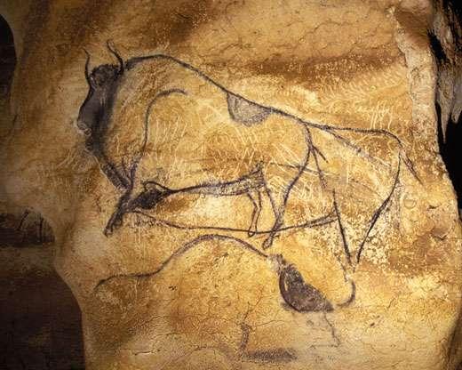 Fig. 4. Ce bison de la Grotte Chauvet (Ardèche) a été daté directement de 30 340 BP ± 570 (Gif A 95128). Le thème du bison dans les grottes ornées durera pendant vingt millénaires. © Cliché J. Clottes. Tous droits réservés