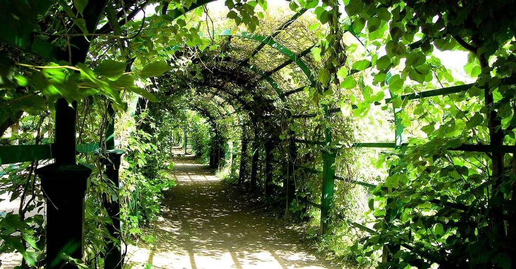 Comment jardiner bio ? © IgorShubin, Pixabay, DP