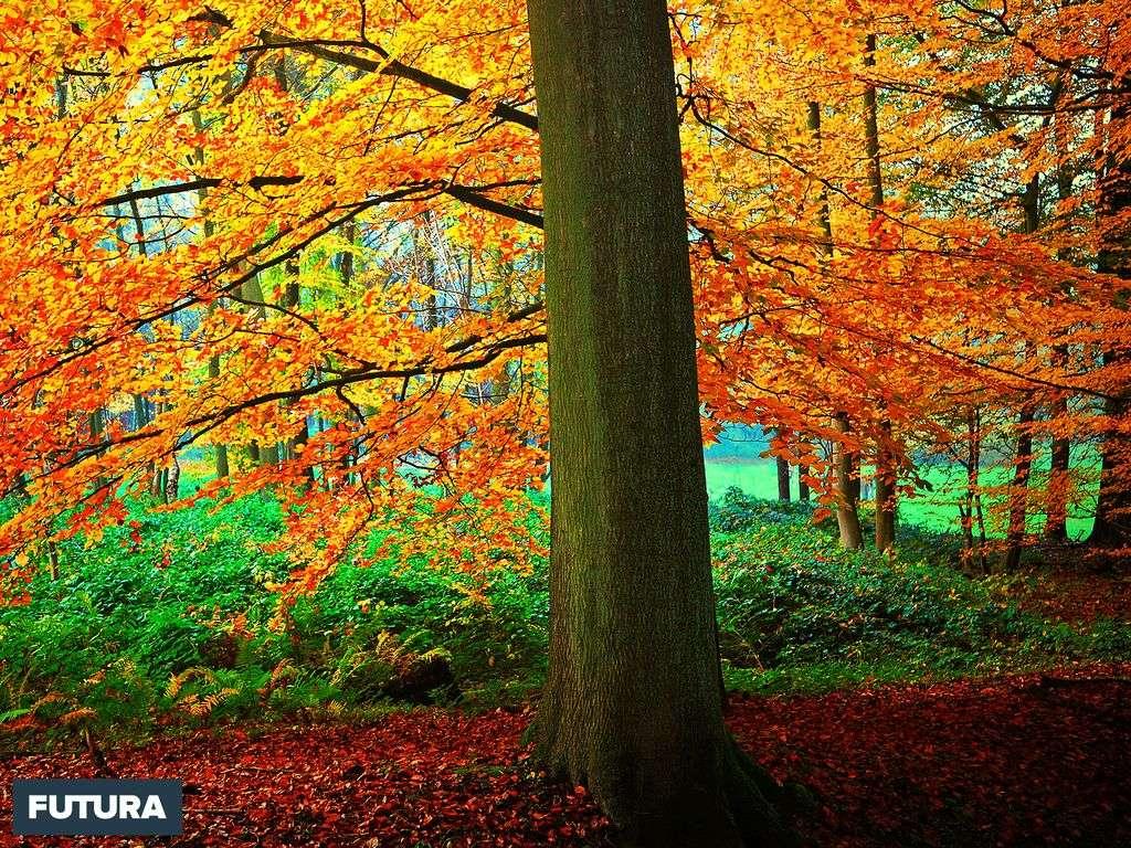 Automne : forêt de Soignes - Belgique