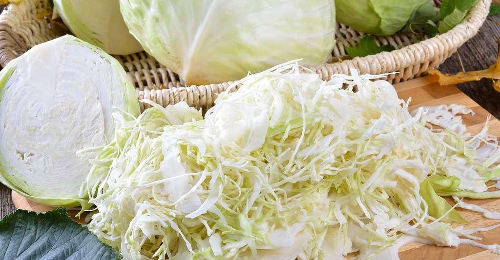 Chou d'Alsace râpé prêt pour la choucroute à cuire. © Karl Allgaeuer, Shutterstock
