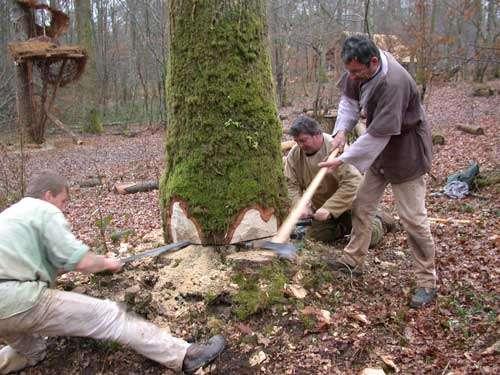 Abattage d'un arbre à la scie et coins en métal. © Guédelon - Reproduction et utilisation interdites - Tous droits réservés