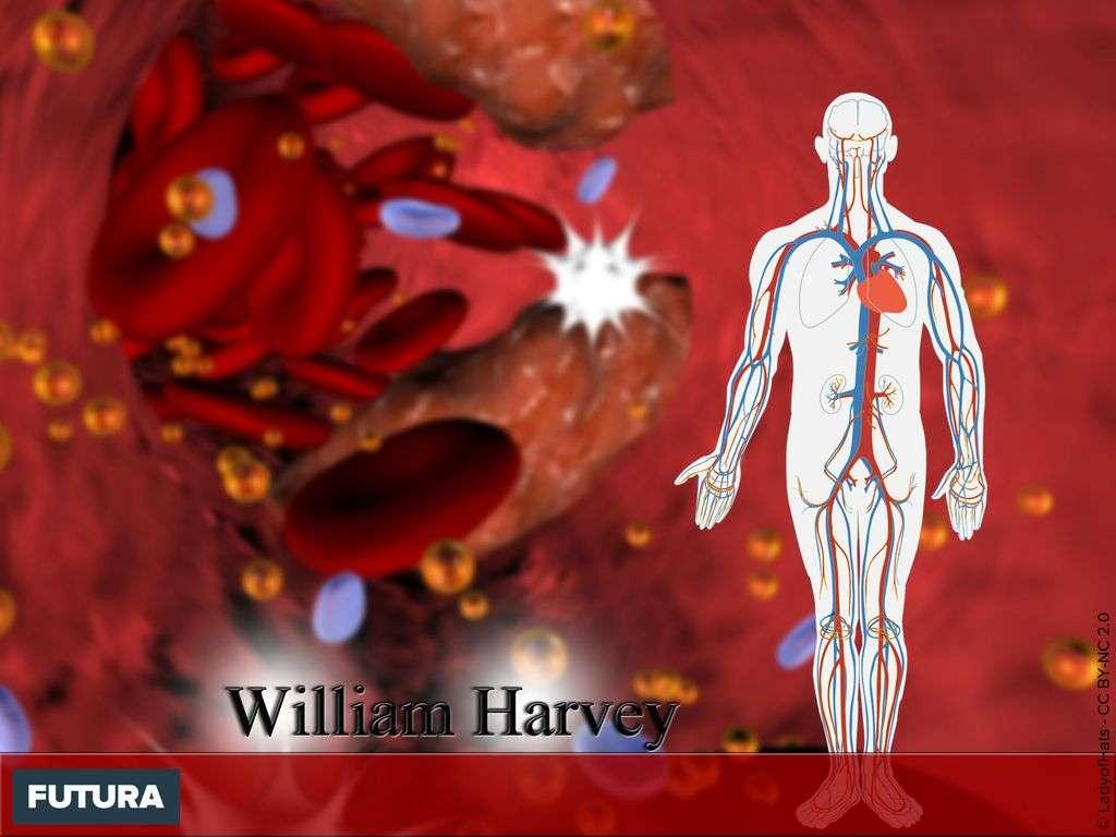 William Harvey découverte de la circulation sanguine