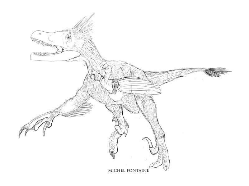 Variraptor première ébauche