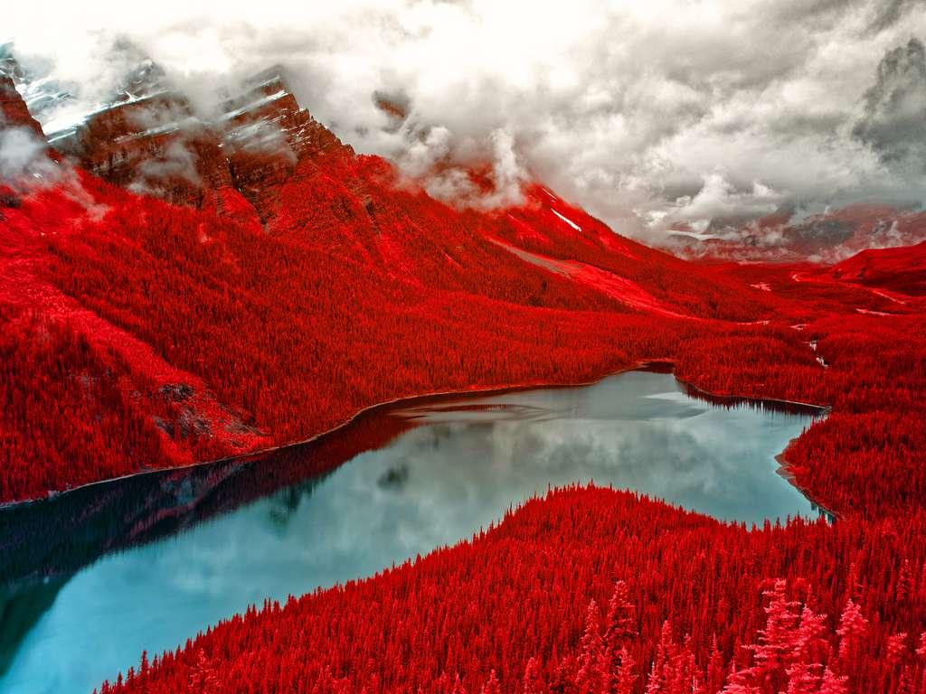 2e place catégorie infrarouge couleur : Velours rouge. © Helen Bradshaw