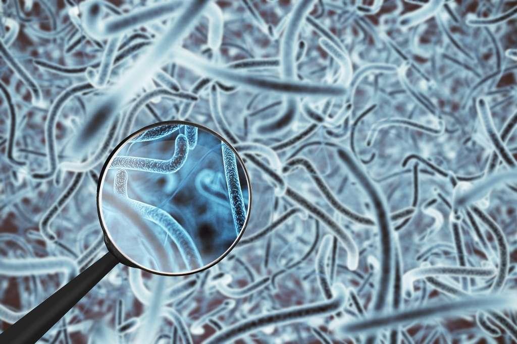 Les découvertes sur le microbiote naviguent entre les articles pseudo-scientifiques à son sujet. © DR, Fotolia