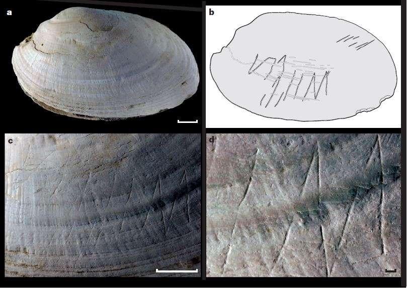 Homo erectus gravait des motifs géométriques sur des coquilles de bivalves. © Joordens et al., 2015