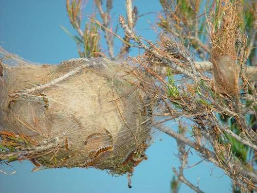 Figure 4 : nid d'hiver. © Jean-Claude Martin, DR