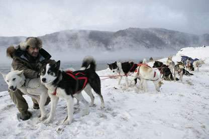 Les dix chiens © Thierry Malty - Toutes reproductions interdites.