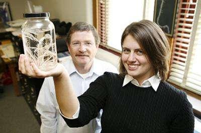 La majorité des crinoïdes modernes étudiés par William Ausich et Christina O'Malley vivent dans des eaux tropicales. Il existe cependant deux espèces en Méditerranée et une espèce dans l'Atlantique nord. © Kevin Fitzsimons, université d'État de l'Ohio