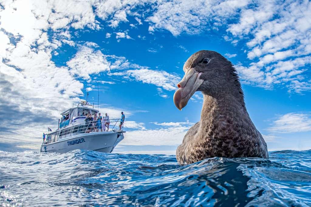 Pétrel de Hall, Ningaloo Reef, Australie. © Naomi Rose, World Nature Photography Awards