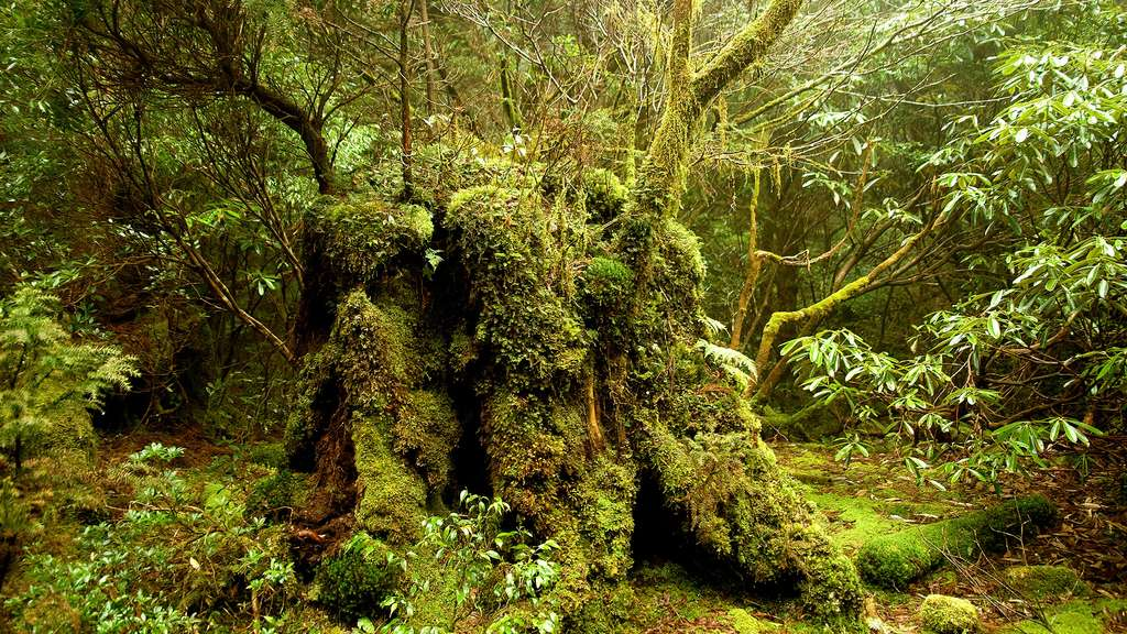 L'extraordinaire forêt de Yakushima