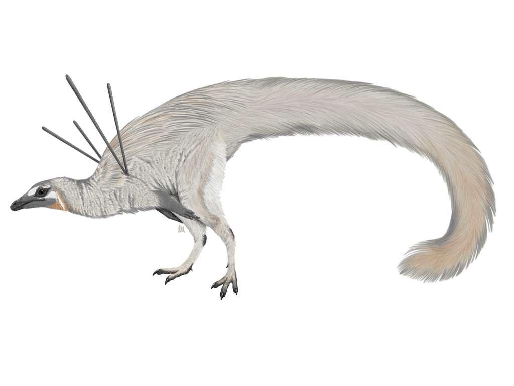 Ubirajara jubatus, un dinosaure à fourrure du Gondwana. © Luxquine, Wikimedia Commons