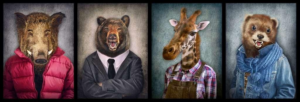 Si les animaux en captivité n'ont pas été trop imprégnés par l'humain, ils pourront retourner à la vie sauvage. © Cranach, Adobe Stock