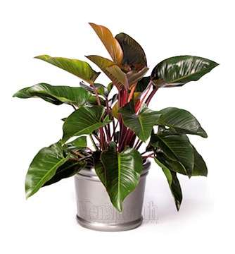 Quelle lumière pour ma plante ? © DR
