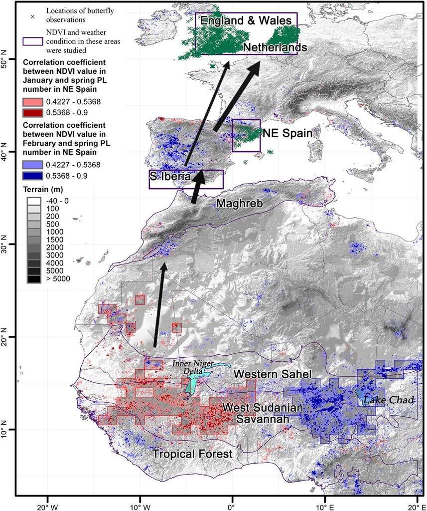 La carte de la migration des belles-dames. Les zones encadrées en violet sont celles étudiés par les scientifiques. © Gao Hu et al. PNAS