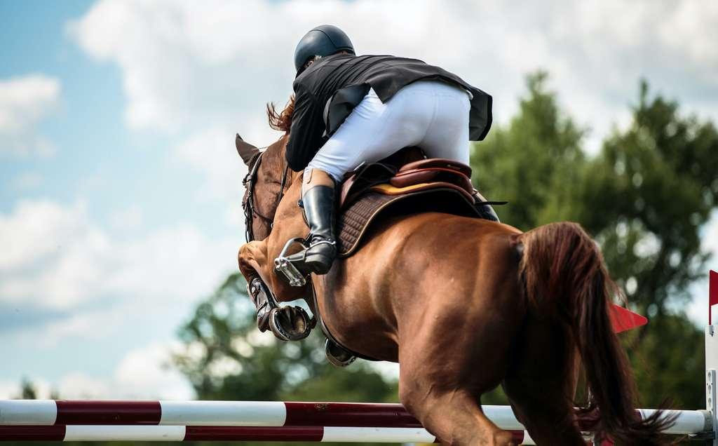 Un cheval de 500 kilos peut rapidement devenir incontrôlable. © catwalkphotos, Adobe Stock