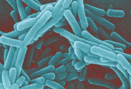 Bactéries du genre Lactobacillus. Ces microbes font partie de la flore vaginale normale, et protègent l'organe contre les infections. © sage_anne, Flickr, cc by nc 2.0