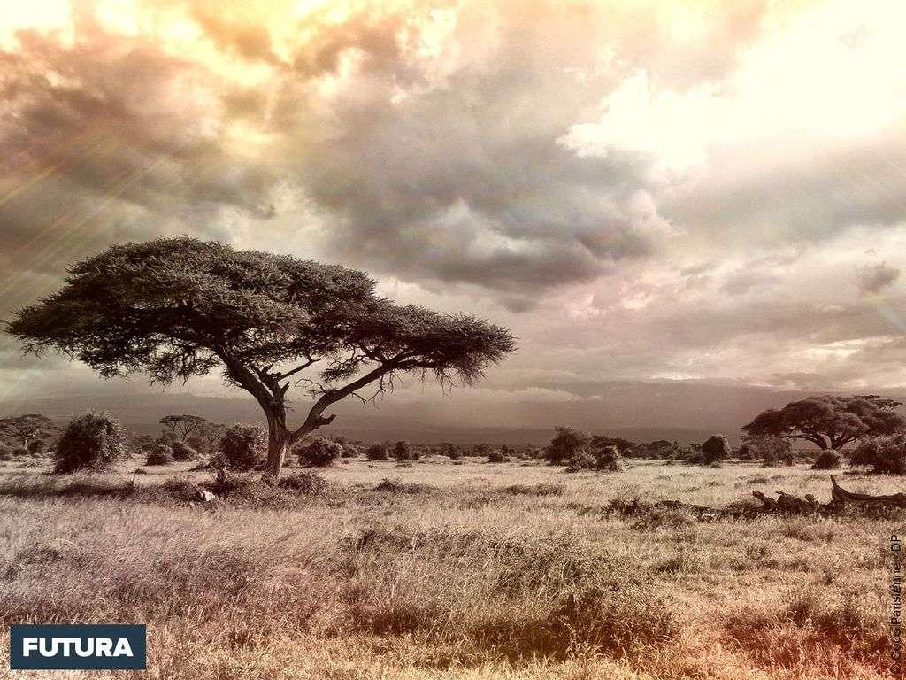 La savane herbeuse sous l'orage