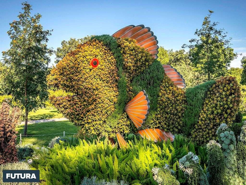 Poisson : Art horticole aux Mosaïcultures Internationales de Montréal
